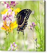 Wildflowers And Butterfly Acrylic Print