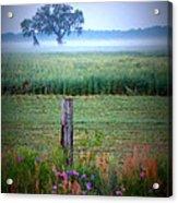 Wildflowers And Fog Acrylic Print
