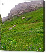 Wildflowers And Mountainous Bluffs At Point Amour In Labrador Acrylic Print