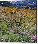 Wildflowers And Mountains  Acrylic Print