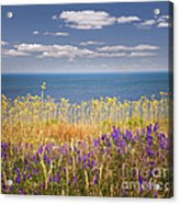 Wildflowers And Ocean Acrylic Print