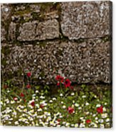 Wildflowers And Olympia Ruins   #9508 Acrylic Print