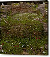 Wildflowers And Olympia Ruins   #9594 Acrylic Print