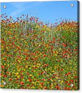 Wildflowers And Sky 2am-110541 Acrylic Print