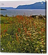 Wildflowers At Lobster Cove Head In Gros Morne Np-nl Acrylic Print