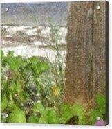 Wildflowers At The Beach Acrylic Print
