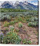 Wildflowers Bloom Below Teton Mountain  Range Acrylic Print