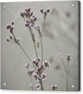 Wildflowers By The Lake Acrylic Print