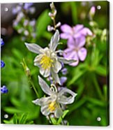 Wildflowers Greeting Card Acrylic Print