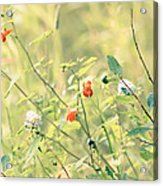 Wildflowers In Bloom Acrylic Print