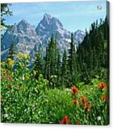 1m9372-v-wildflowers In Cascade Canyon, Tetons Acrylic Print