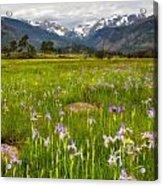 Wildflowers In Rocky Mountain National Park Acrylic Print