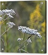 Wildflowers In September 2012 Acrylic Print