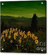 Wildflowers In The Beartooth Mountains Acrylic Print
