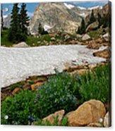 Wildflowers In The Indian Peaks Wilderness Acrylic Print