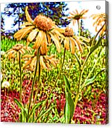Wildflowers In The Wilds Of Colorado Acrylic Print