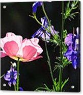 Wildflowers On Black Acrylic Print