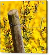 Wildflowers On Fence Post Acrylic Print
