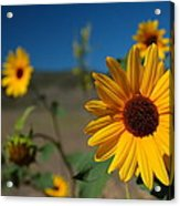 Wildflowers Acrylic Print