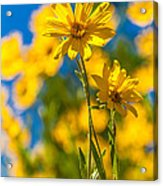 Wildflowers Standing Out Acrylic Print