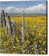 Wildflowers Surround Rustic Barb Wire Acrylic Print
