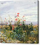 Wildflowers With A View Of Dublin Dunleary Acrylic Print