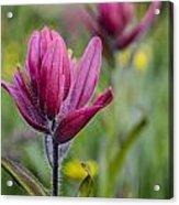 Wildflowers5 Acrylic Print by Aaron Spong