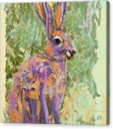 Wildlife Haas Acrylic Print