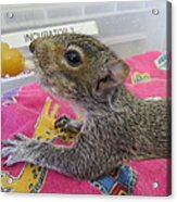 Wildlife Rehabilitation Acrylic Print