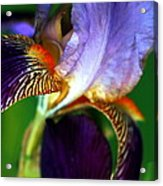 Wildly Colorful Acrylic Print