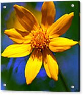 Wildly Yellow Acrylic Print
