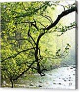 Williams River Mist Acrylic Print