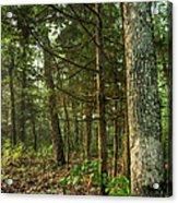 William's Woods Acrylic Print