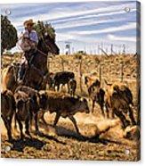 Williamson Valley Roundup 9 Acrylic Print