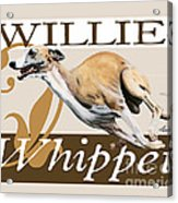 Willie The Whippet Acrylic Print by Liane Weyers
