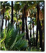 Willis Palm Oasis Acrylic Print