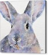 Willis Rabbit Acrylic Print