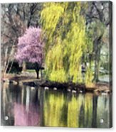 Willow And Cherry By Lake Acrylic Print
