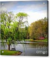 Willow Lake Acrylic Print by Crystal Joy Photography