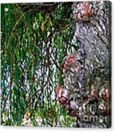 Willow Man Profile Acrylic Print