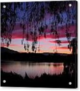 Willow Silhouette Acrylic Print
