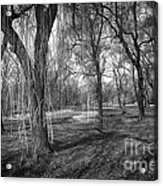 Willows In Spring Park Acrylic Print