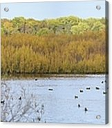 Willows Of October Acrylic Print