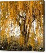 Willow Yellow Rain  Acrylic Print