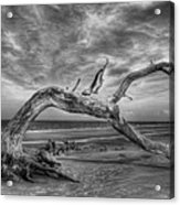 Wind Bent Driftwood Black And White Acrylic Print