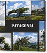 Wind-bent Flag Trees In Tierra Del Fuego Acrylic Print