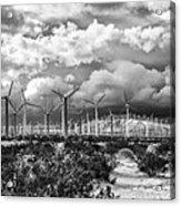 Wind Dancer Palm Springs Acrylic Print by William Dey