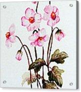 Wind Flowers Acrylic Print