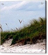 Wind In The Seagrass Acrylic Print