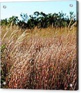 Windswept Grassy Meadow Acrylic Print